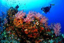 Under Water Adventures