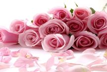 Call 980-238-3221 And Get Best Flower Delivery in Charlotte, NC / We can have any of the stunning flower delivery in Charlotte NC as soon as today.