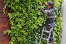 Vertical Garden Care