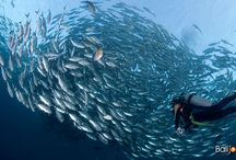 Bali Diving / #Bali #Diving and #UnderwaterPhotography