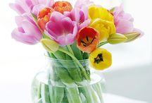Plant / Floral arrangements