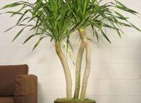 Plants that make a statement
