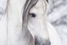 Hester er best / Hester