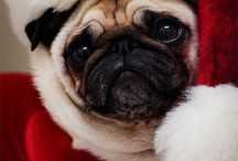 Christmas Furbabies