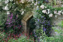 дикий сад