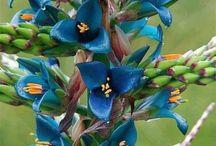 Flowers , Viràgok