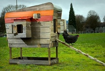 Chicken Coops / by Carson