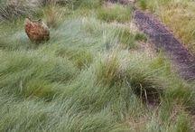 california landscaping