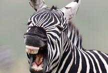 vtipná zvířata