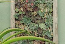 succulent board