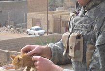 Soldat und Kätzchen
