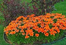 Gardening / All about gardening and how to have a beautiful yard.