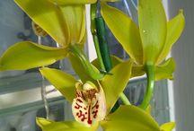 My Orhids