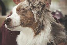 Dream Dogs