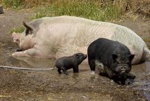 Fam. Pig / Pig parents and their piggies / by Simone Vaas