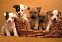 Il mio cucciolo - Italia / Tutti i PIN dei vostri amati cuccioli!