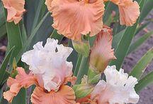 A föld gyönyörű virágai