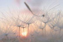 vackra bilder