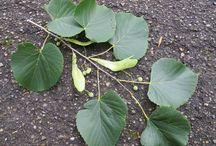 Essbare Pflanzen