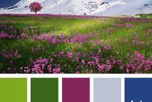 website color boards
