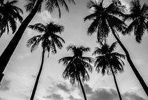 • BEACHES •