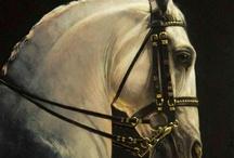 лошади и животные