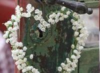 Blomster bilder