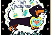Lovely dachshunds