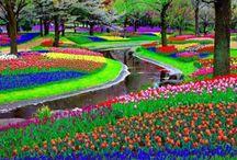 Rainbow Garden styles / Open the door to a colorful garden ...