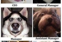 Funny dogs / Job position