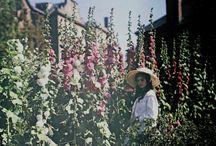 Autochrome & Colour Vintage Photography