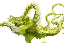 octopus inspiration