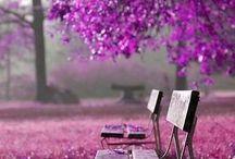 Lilaa ja violettia