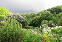 JB garden