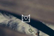 Carine Cats