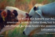 I Respect Animals