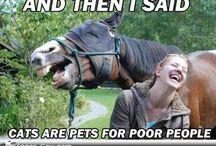 hilarious Horses
