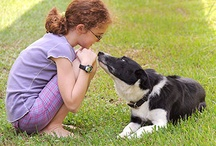 Pet Care / by MSU CVM