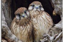 birds / by Debbie Kobs