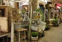 Shop display plantS