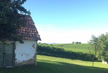 Kristinus vineyard in Summer / Kristinus Wine Estate - Cellar key to summertime Lake Balaton.