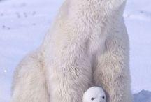 Polar bear ❄️