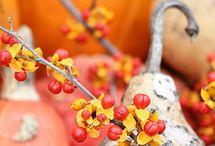 Autumn / by Natalka Pavlysh