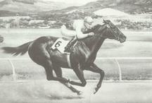 All the Pretty Horses / by Lynn Stadel
