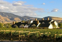 Wine Country Inn, Palisade, CO / An 80 room wine-themed boutique hotel nestled in the middle of 21 acres of vineyard with pool, hot tub, event and banquet space, two restaurants and comfortable sleeping rooms.