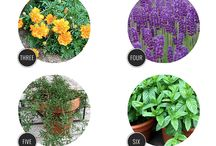 Bug repellent plants