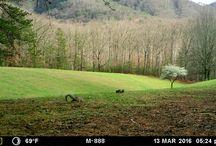 2016 Moultrie M-888 Trail Camera / Infrared Moultrie M-888 Trail Camera.