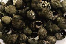 Gastronomía / La gastronomía más típica de Santander está basada en los productos de la mar. Los pescados y mariscos gozan aquí de una fama bien merecida por su calidad y frescura y son muchos los restaurantes con predominio de este tipo de platos en su carta.