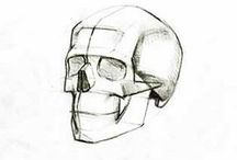 Reference | Skull