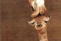 Animals & Wildlife / Animals & Wildlife  / by Charlie Cox